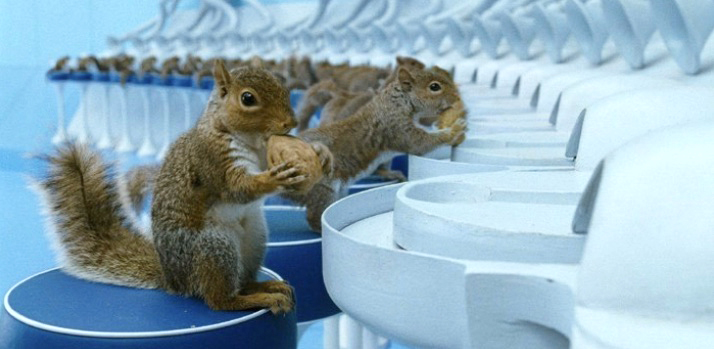Squirrels in Charlie and the Chocolate Factory