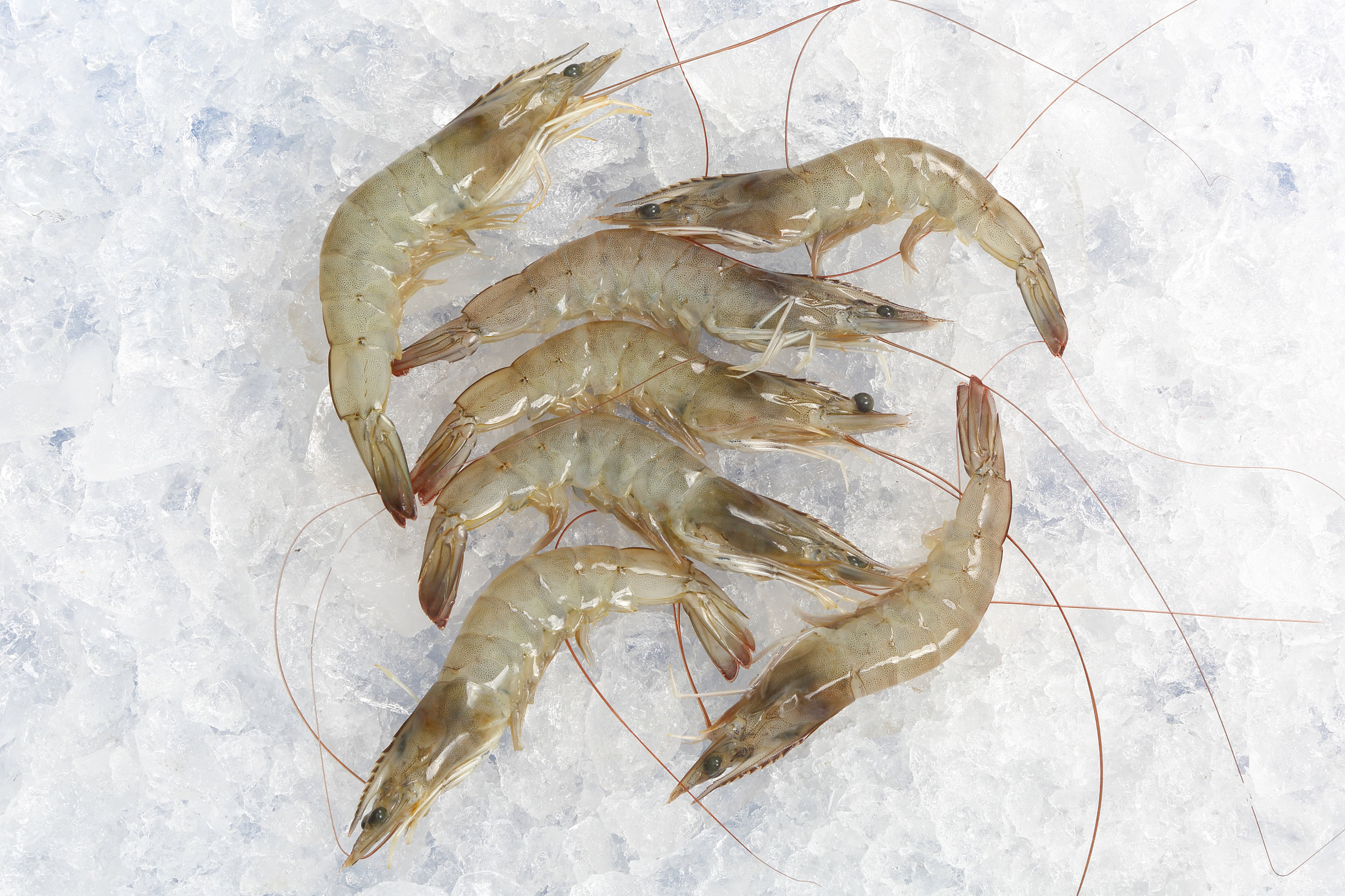 Frozen Shrimps - Seacaught/Farmed ShrimpsVannamei , Tiger; Headon / Headless / PUD