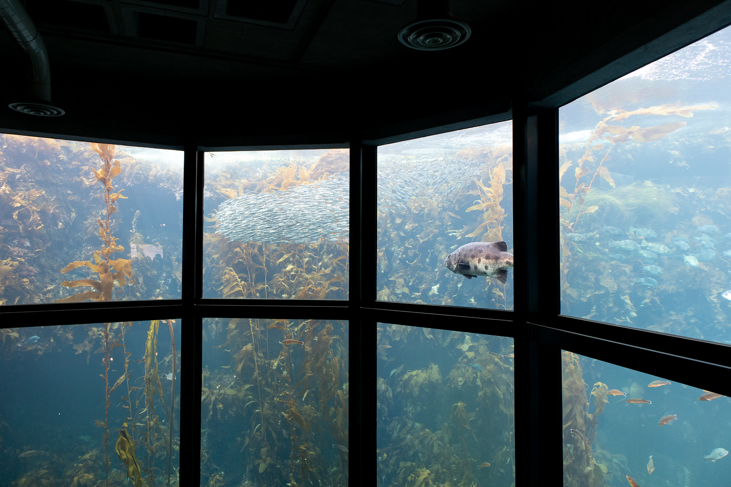montereay_california_aquarium.jpg