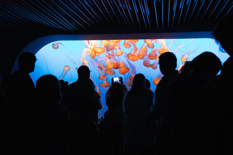 monterey bay jellyfish.jpg