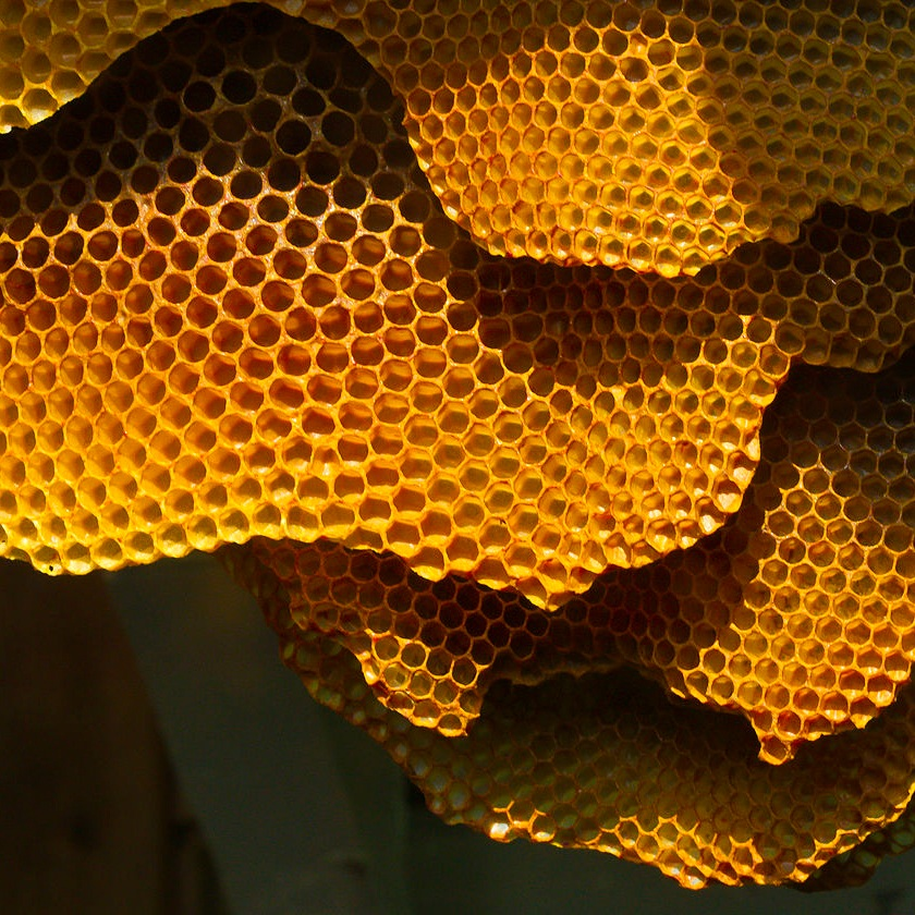 PROJECT LAUNCH   The Beehive kicked off in May 2019 thanks to support from SHEDx and The Community Brain