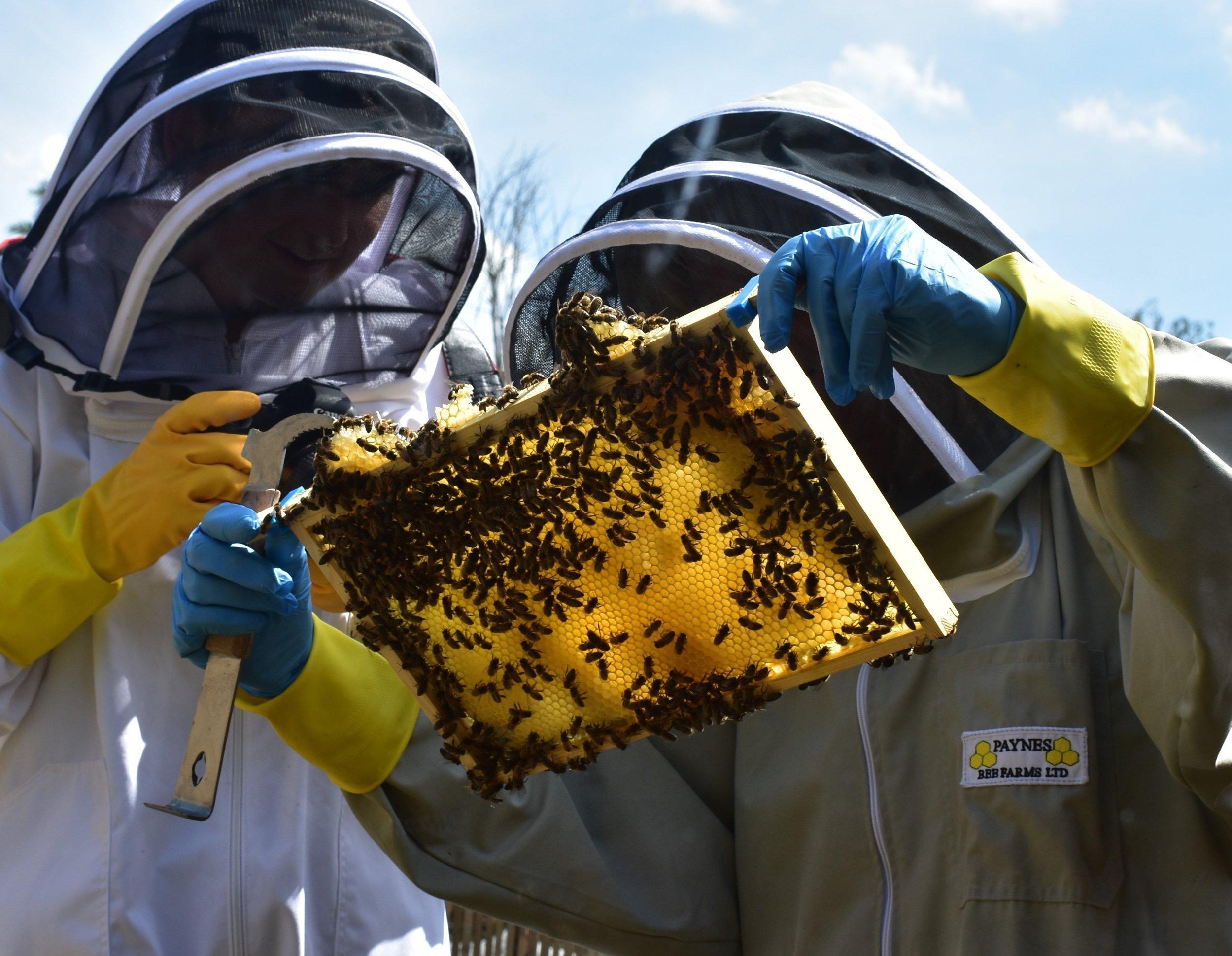 can i keep bees image.jpg