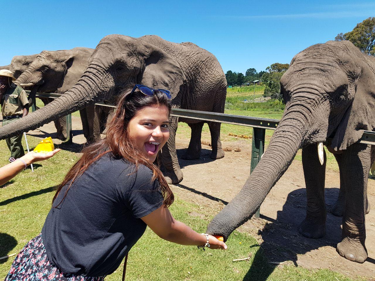Laura elephants.JPG