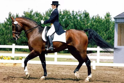 Leslie Kennedy - Learn more about Leslie's accomplishments as an EC/USEF judge, FEI steward and her BodyWork.