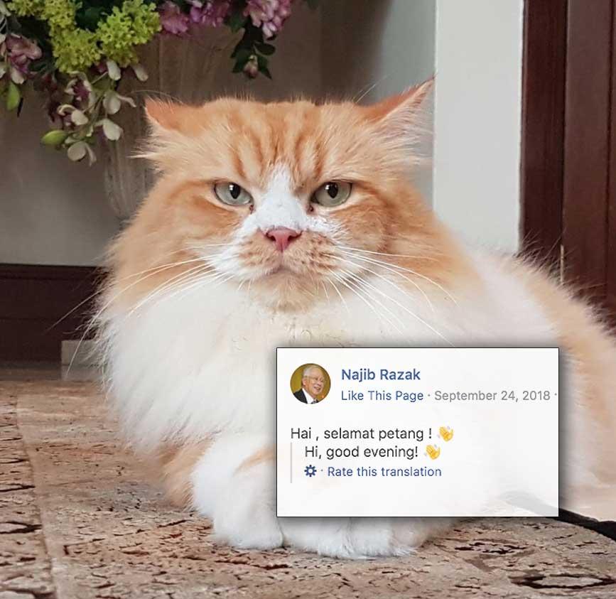 Najib-cat-v4.jpg