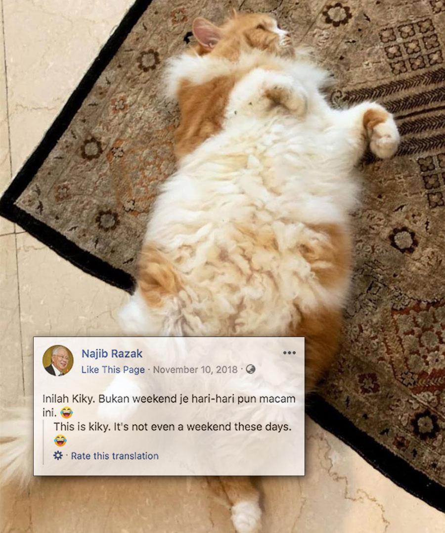 Najib-cat-v6.jpg