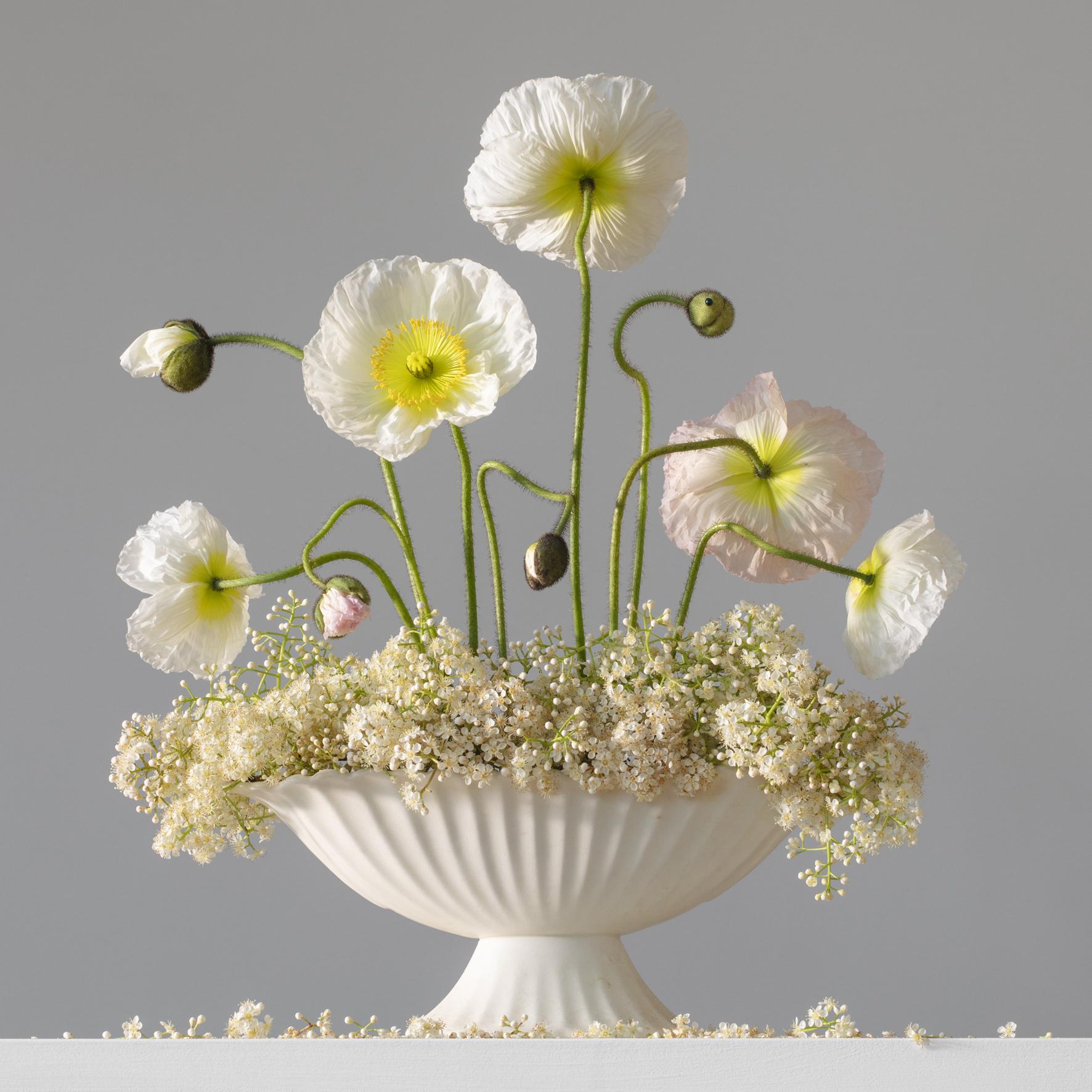 Poppies White 4.45 pm.jpg