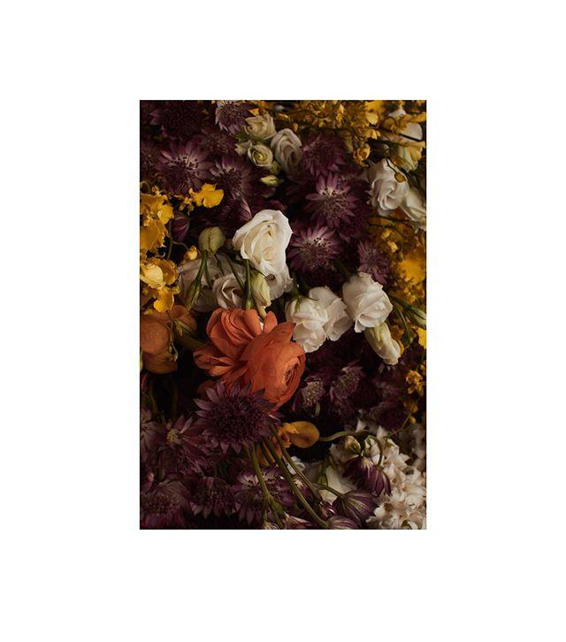 September Issue is out!!!!Check out link in bio👆👆👆 _____ Photographer: Joshua Pestka @joshua.pestka  Stylist: Anna Talyzin @lnestyle  Creative director and Makeup Artist: Mari Shten @marishten  Production: Zhenya Selck - Valeeva www.7and7.co, Anna Verholansteva /Verholantzeva Production @anna_verkh ⠀ _______ #flowers #boranical #autumnflowers #labotanicamagazine #labotanicamagazinecover #autumnissue #septemberissue #labotanica