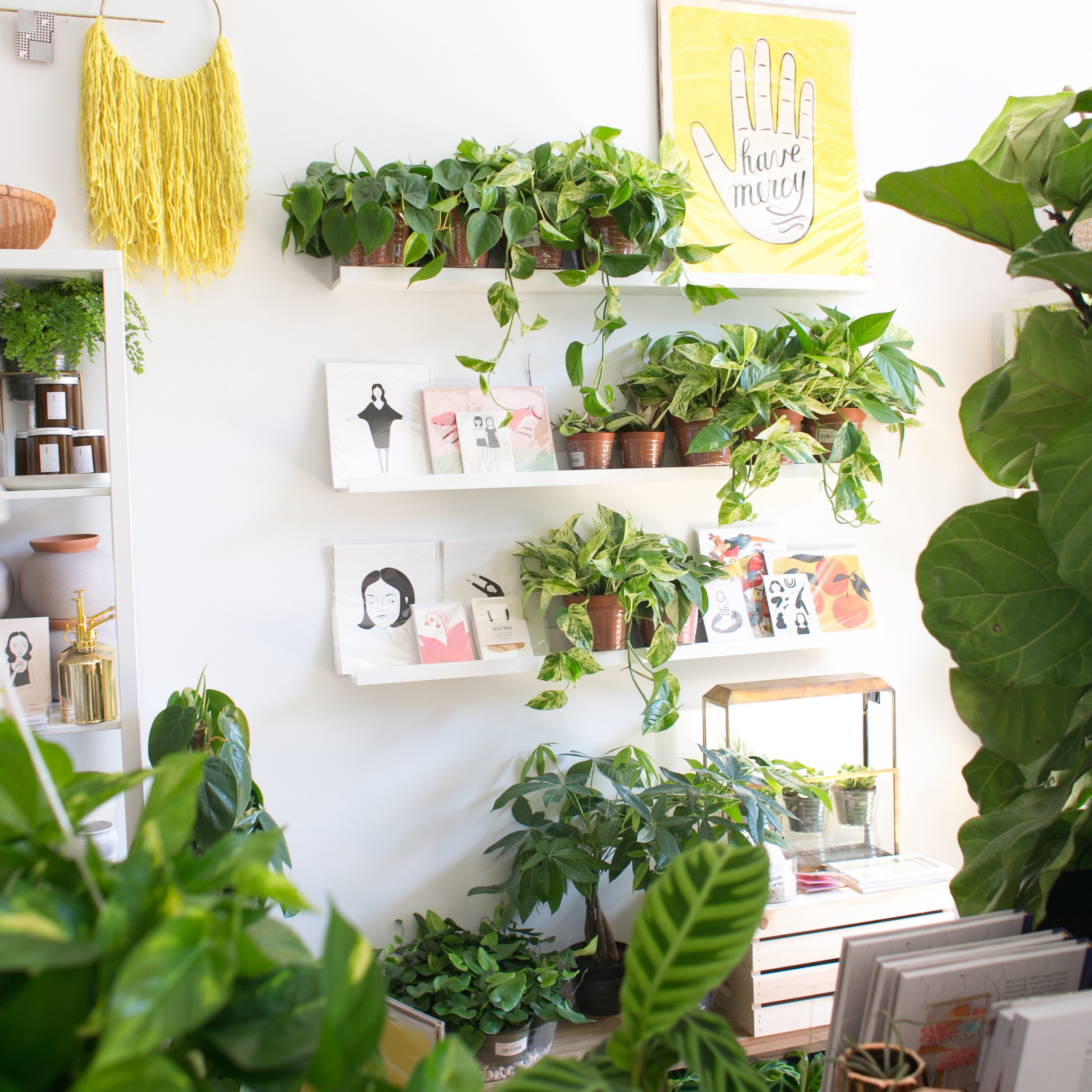 The ZEN Succulent - A neighborhood plant & gift shop full of unique greenery and handcrafted gifts from emerging makers - featuring modern terrariums, workshops, and DIY Terrarium Bar with storefront locations in Downtown Raleigh and Downtown Durham.208 S Wilmington St.