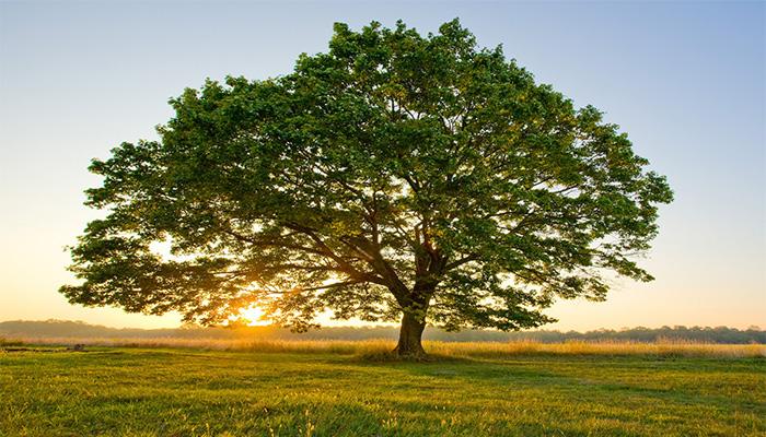 tree with sun.jpg
