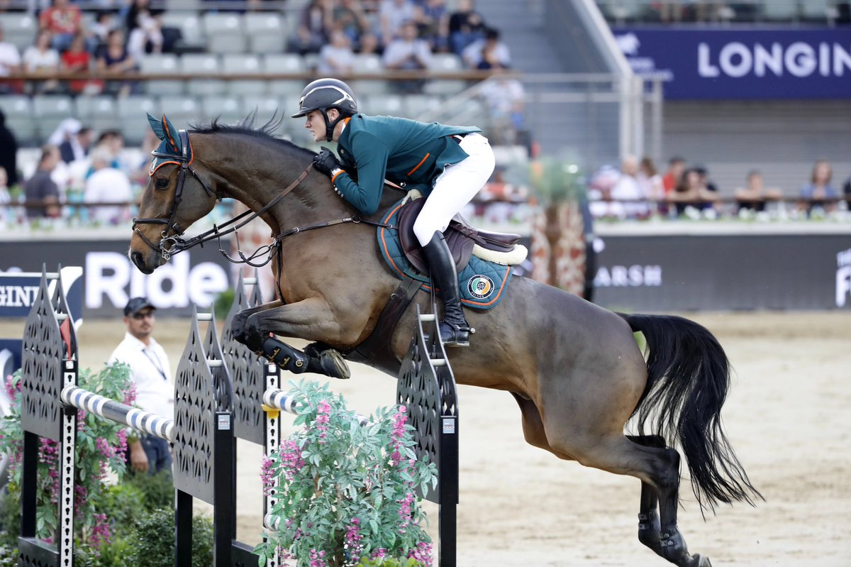 QUINTANO - RIDDEN BY IRISH RIDER MICHAEL DUFFYCOMPETING CSI5*
