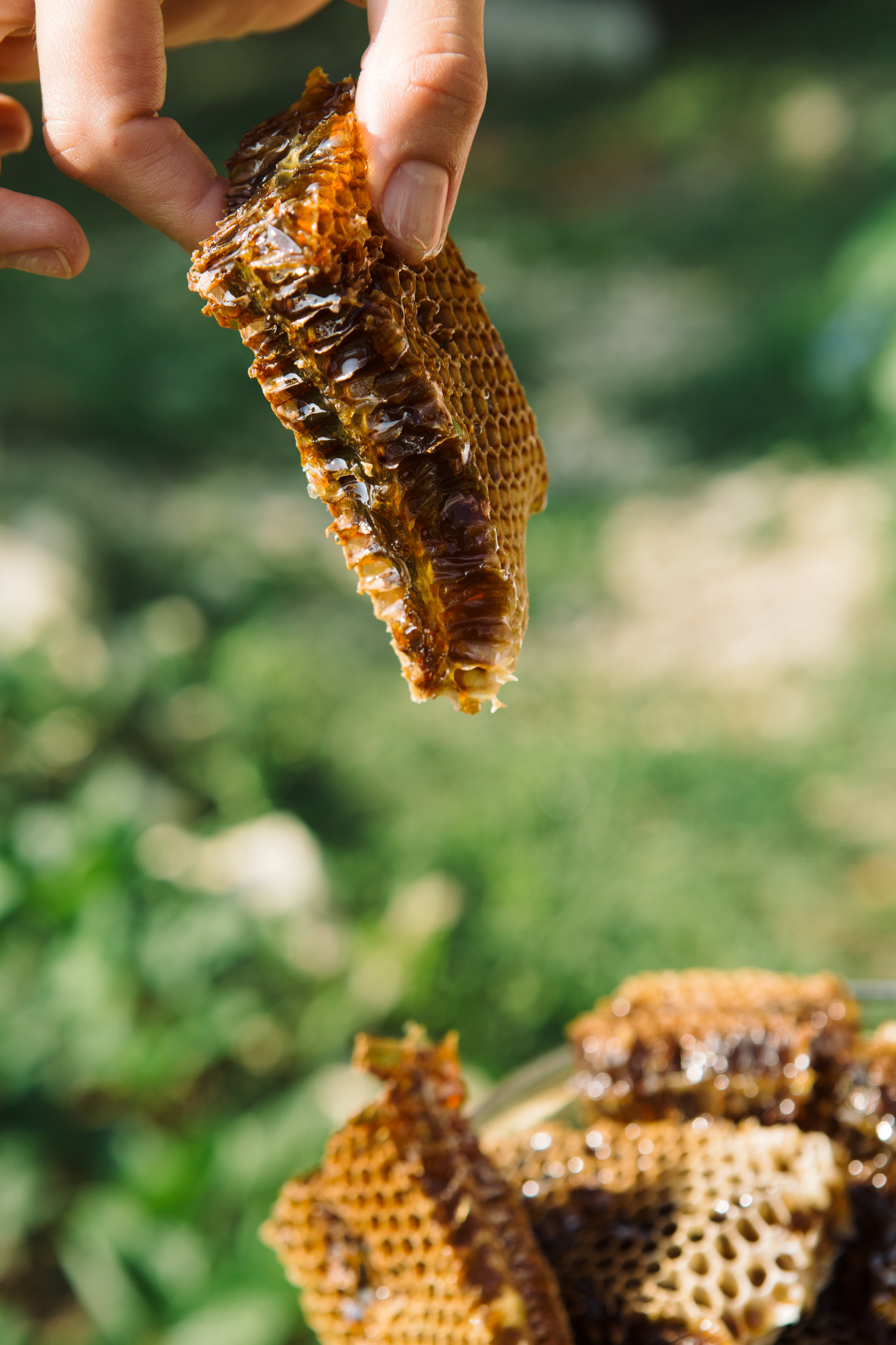 fingers-with-delicious-and-organic-honeycomb-PDW6NWG.jpg