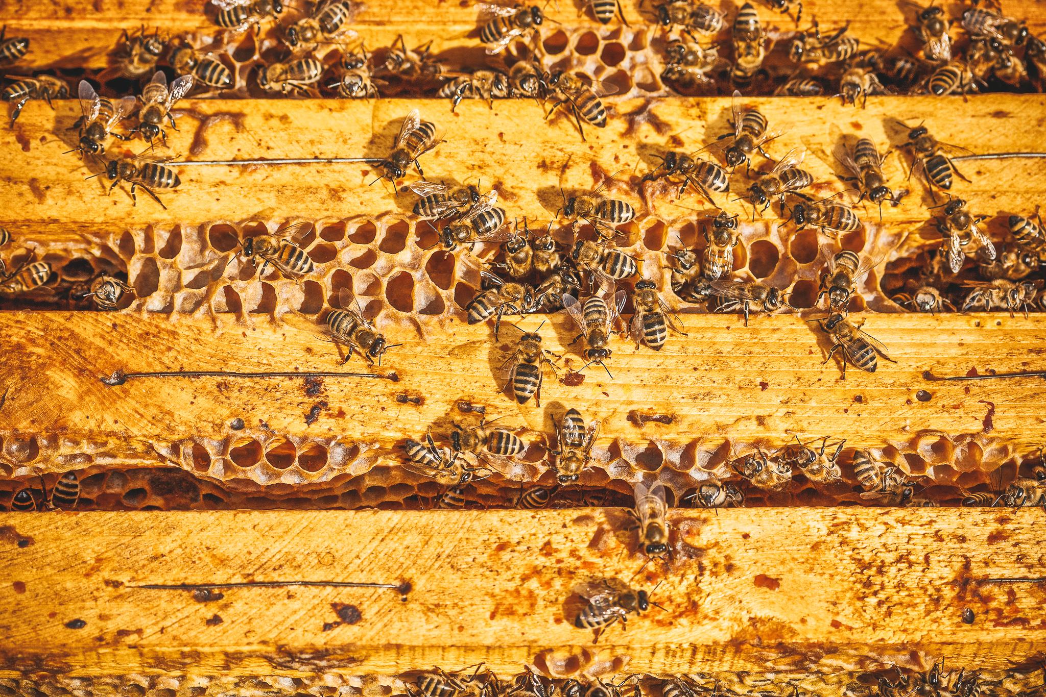 worker-bees-PBXNCNF.jpg