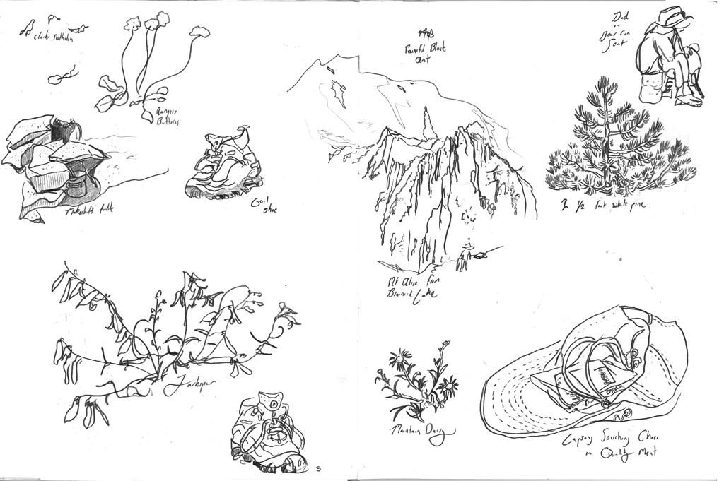 Sketchbook-White-Big-Pine_twitter.jpg