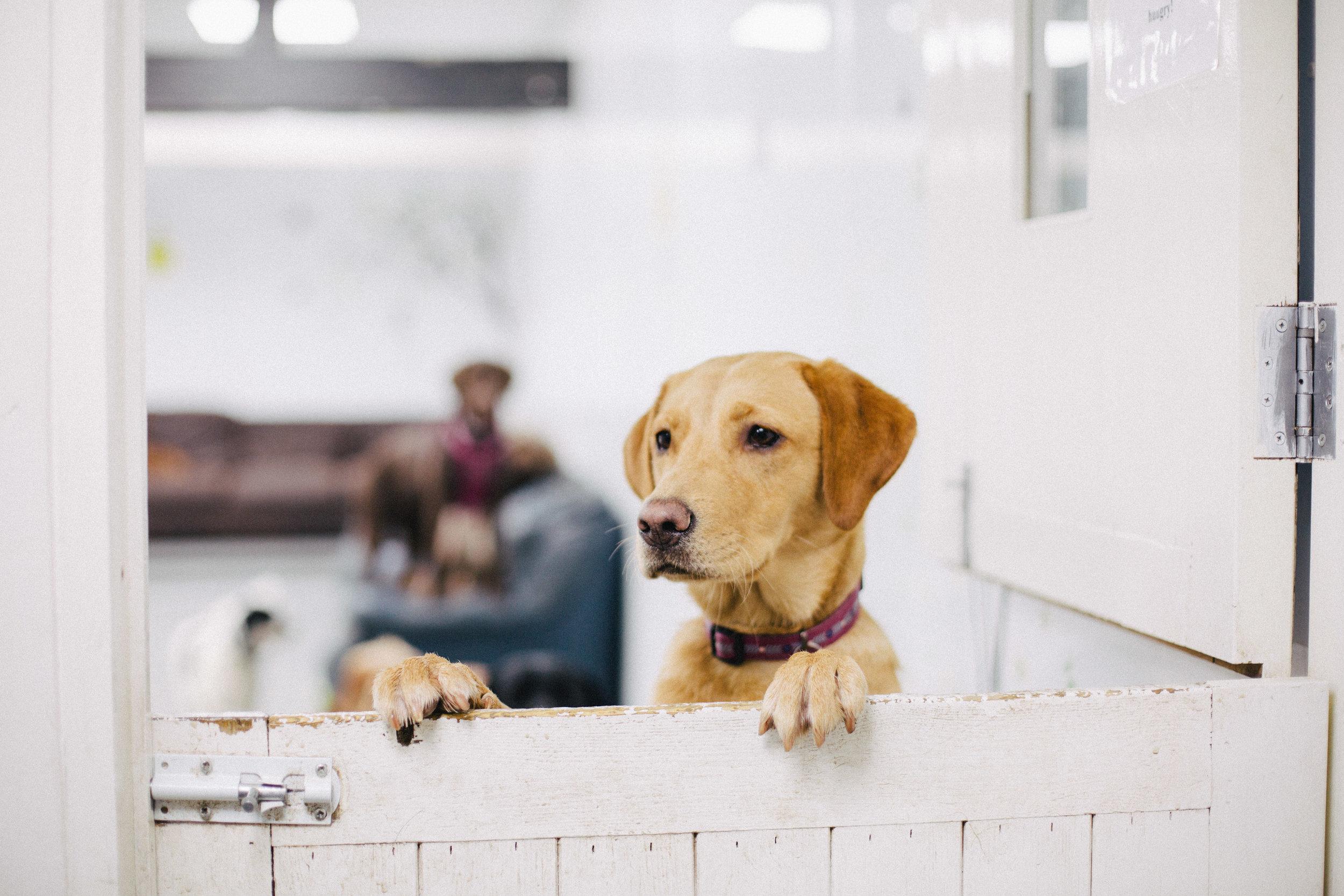 dog_boarding_winchester.jpg