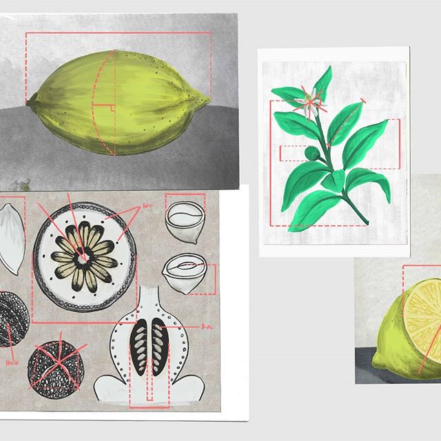 Digitally painted designs and concepts for a film on the scientific phenomenon of Emergence. More fruit 🍋 . . . #2danimation #animation #designs #digitalpainting #paint #texture #lemon #fruitbowl #stilllife #postcards