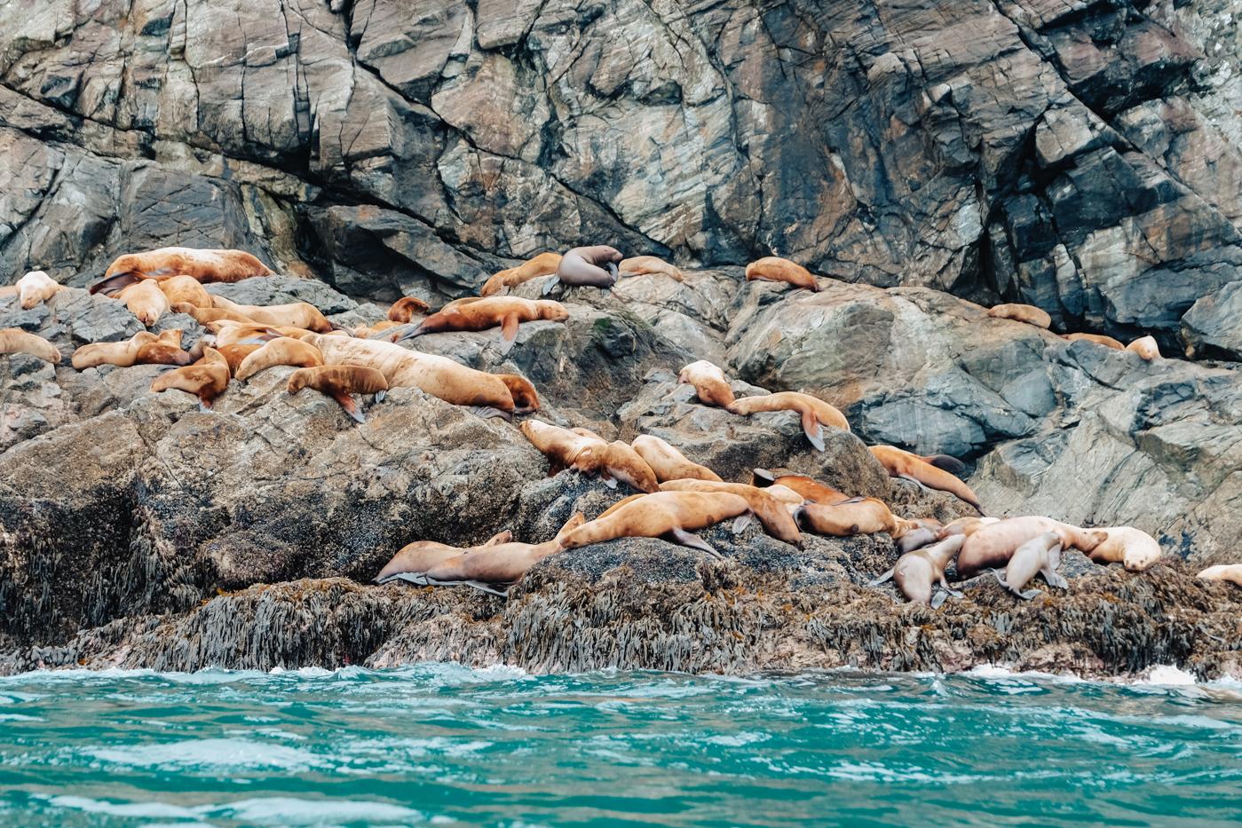 inian-islands-sea-lions.jpg