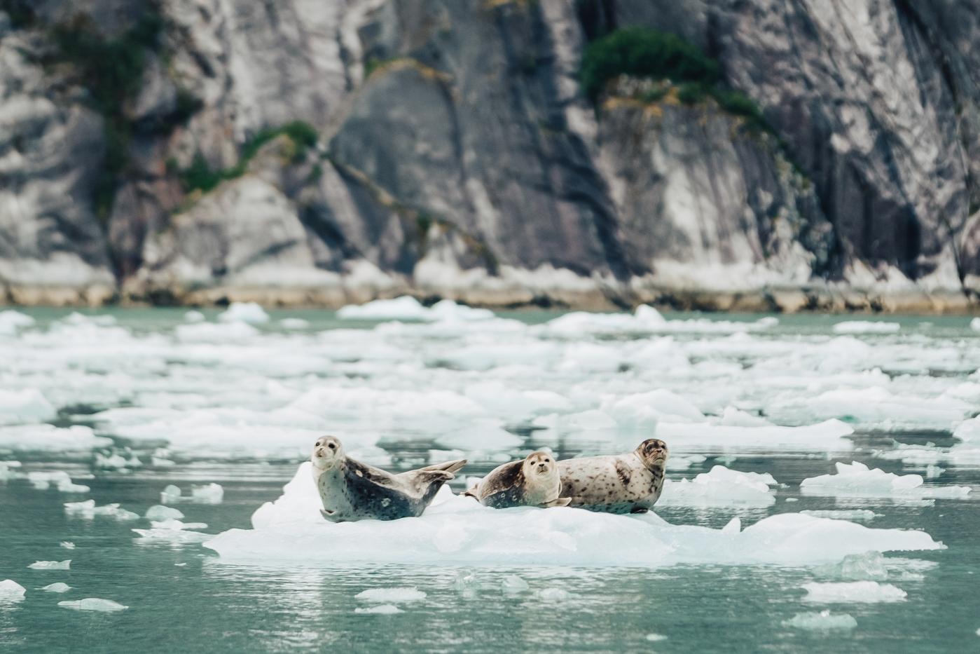 seals-icebergs-alaska.jpg