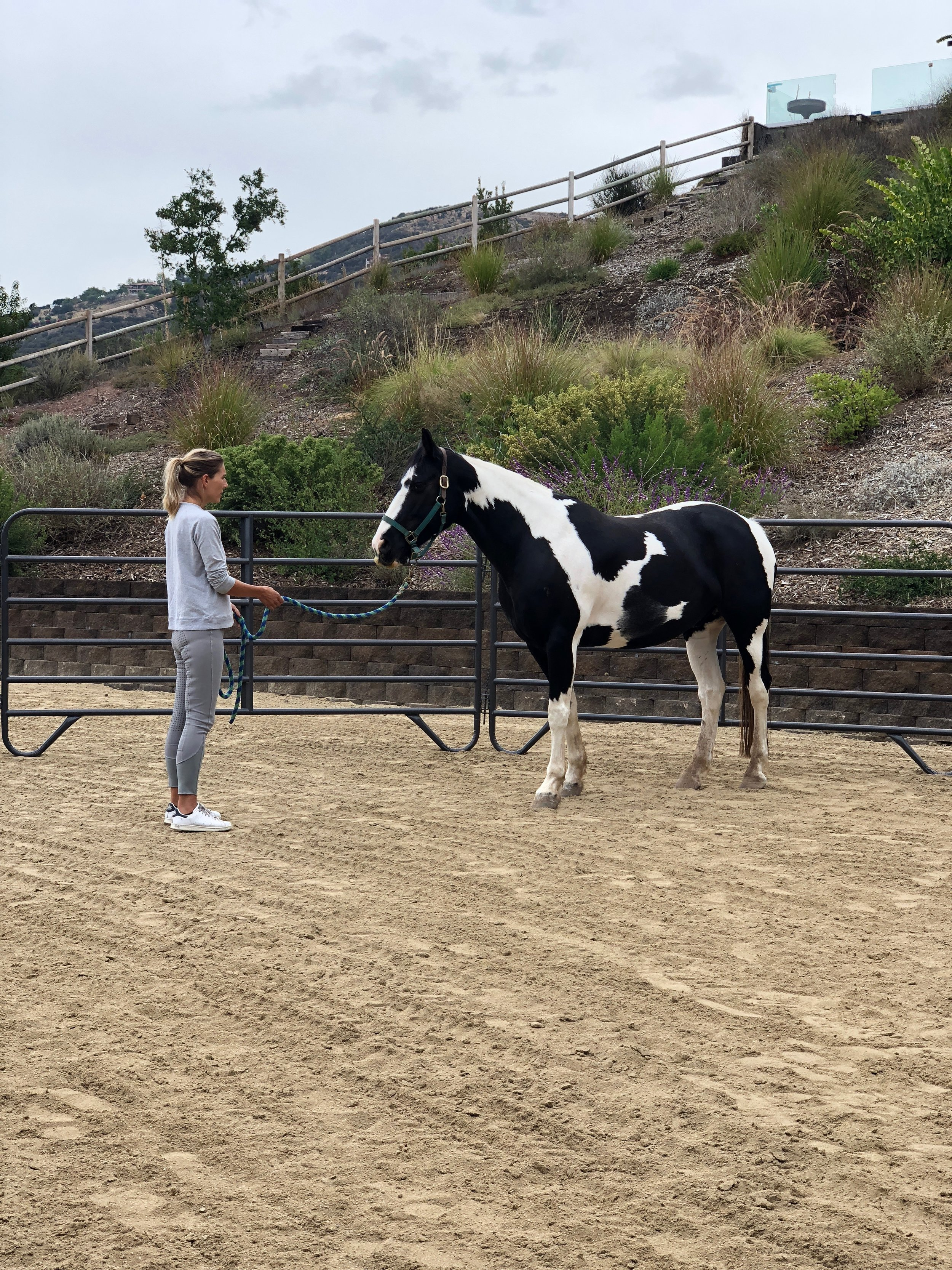 WHAT IS EQUUS COACHING®? - Find out about the coaching Frida provides