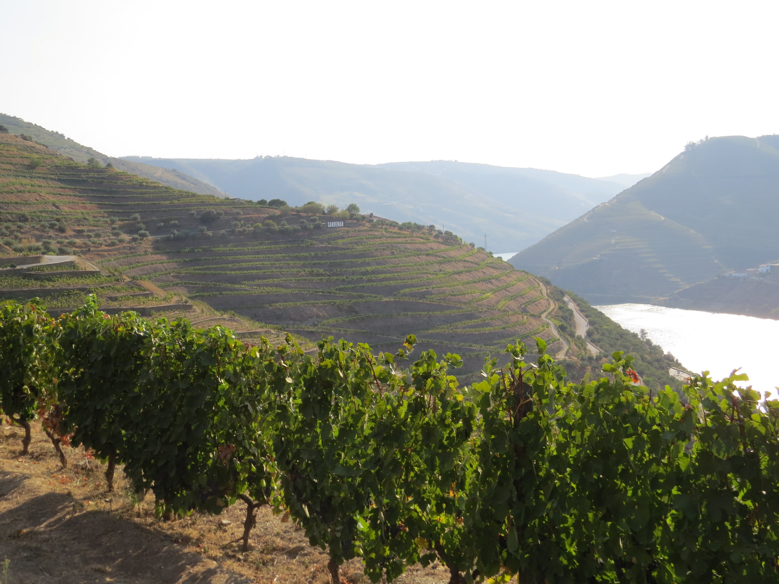 Winery scenery (2).JPG