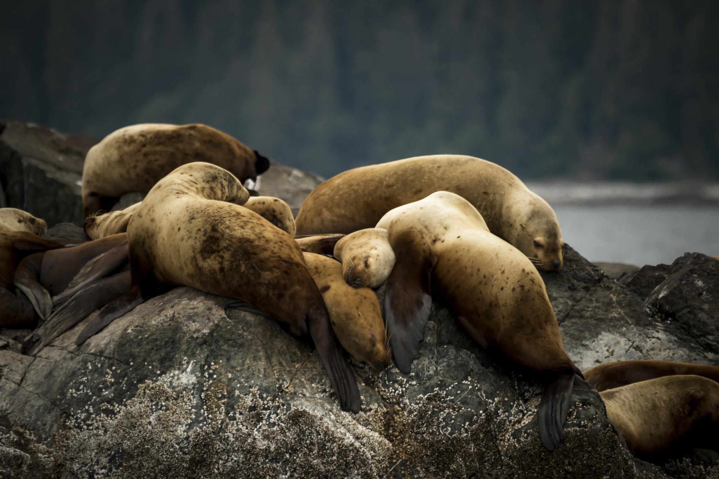 Plus de 100 000 de mammifères marins sont tués par les débris dans les océans, chaque année.