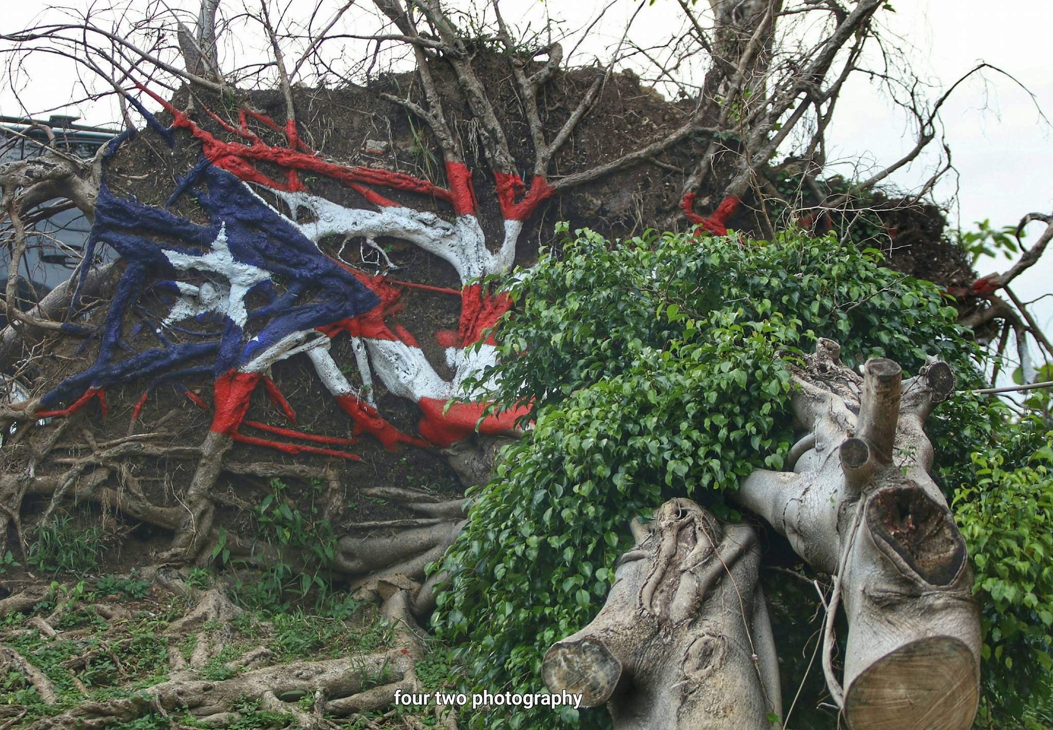 website+-+puerto+rico+tree+flag.png