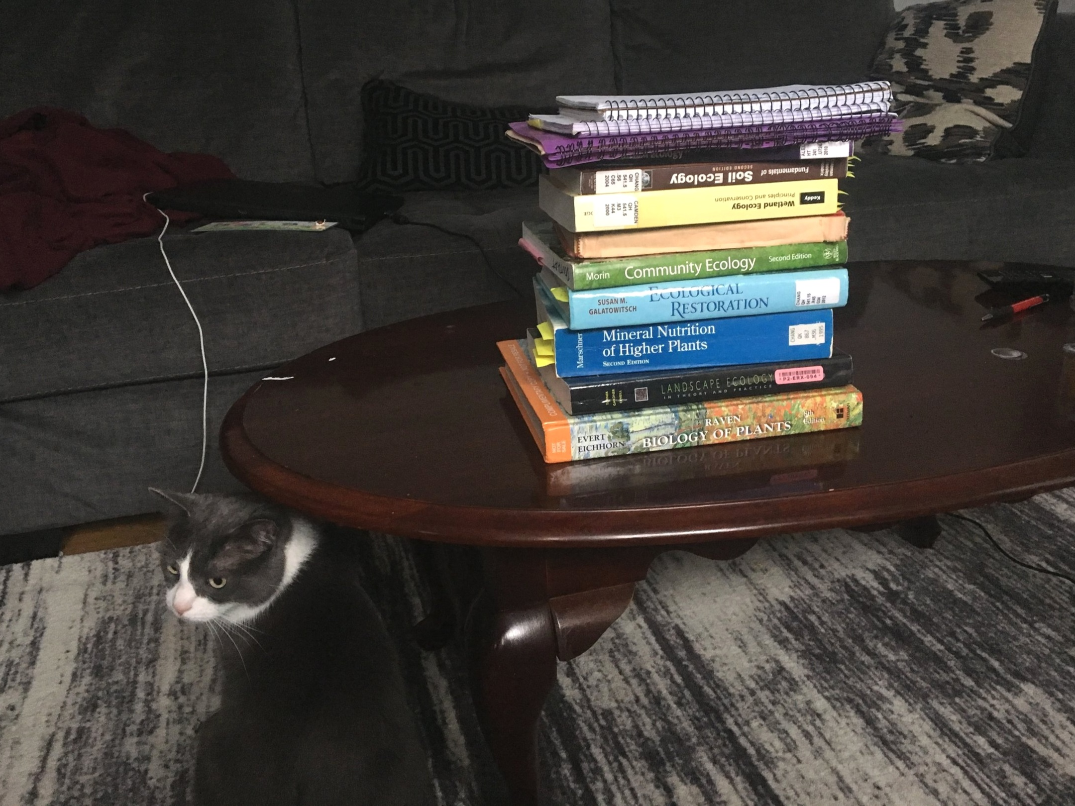 This is the stack of most of my assigned reading for my qualifying exam. My research assistant, Zelda, is to the left.