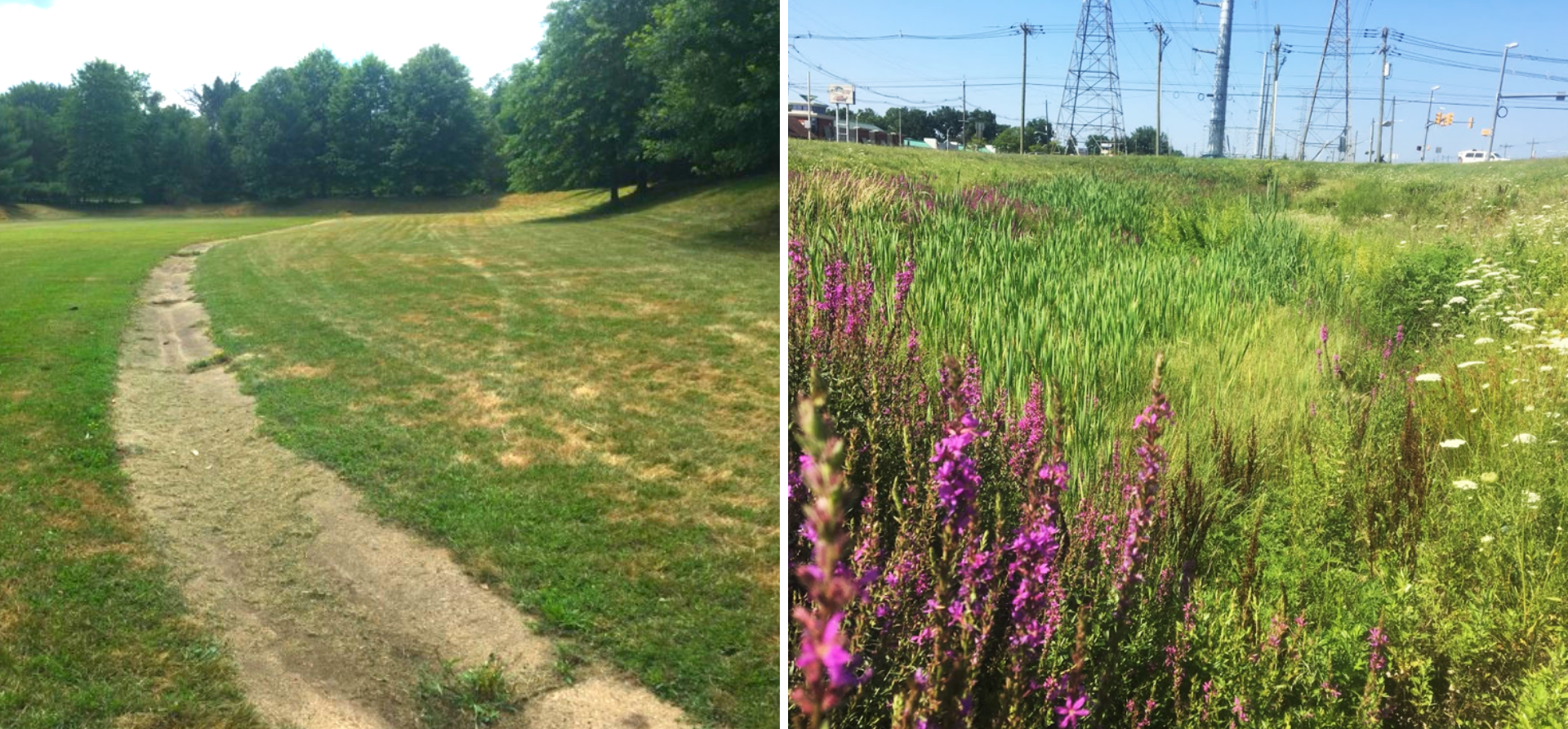 Figure 2. Two types of stormwater detention basins. On the left is the traditional style of basin with grass. On the right is an example of a basin that is lined with dense vegetation to remove pollution.