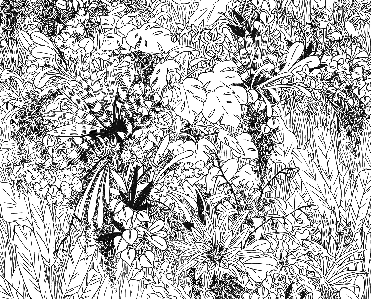 epiphytes lineart.jpg