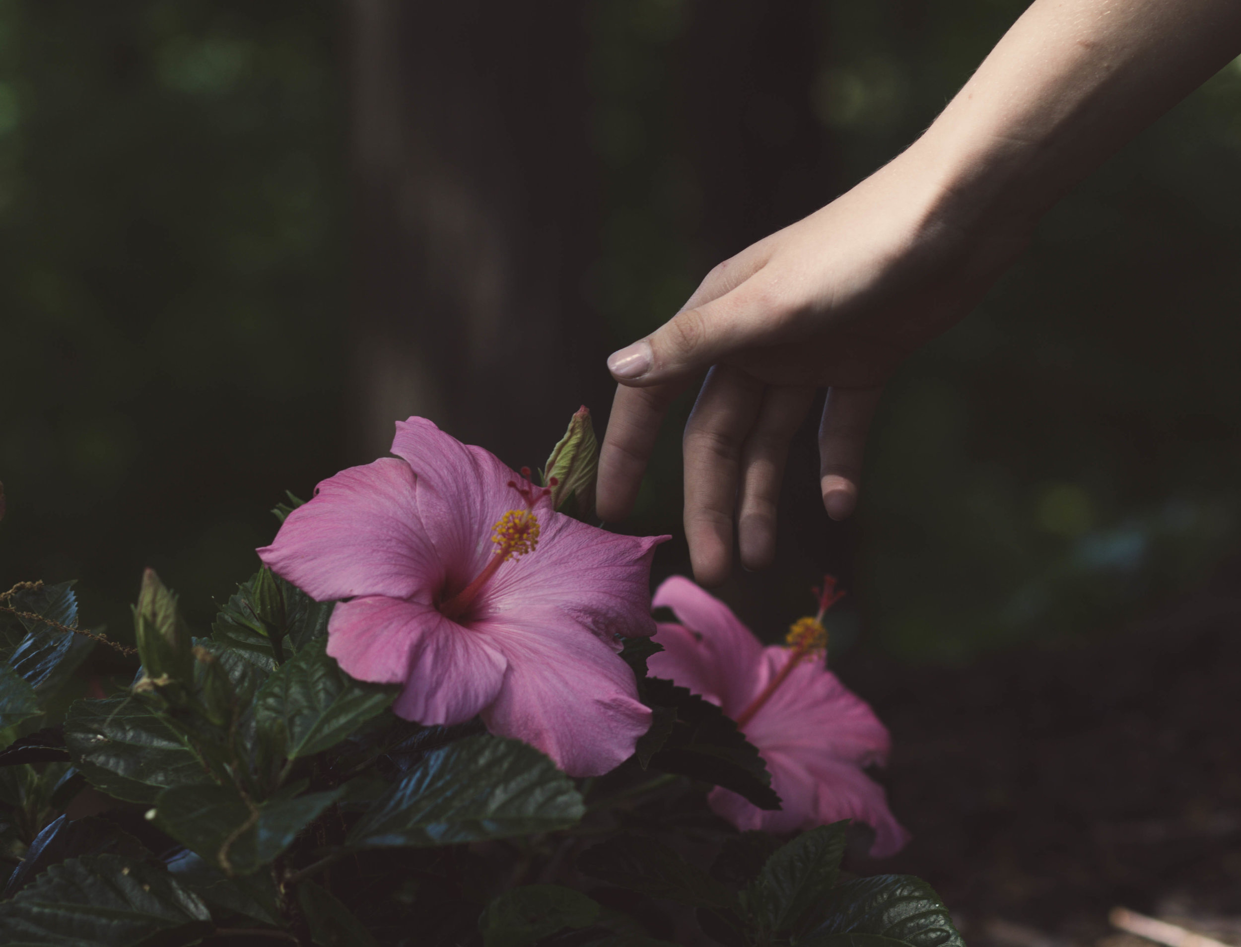 Hand reaching for flowers