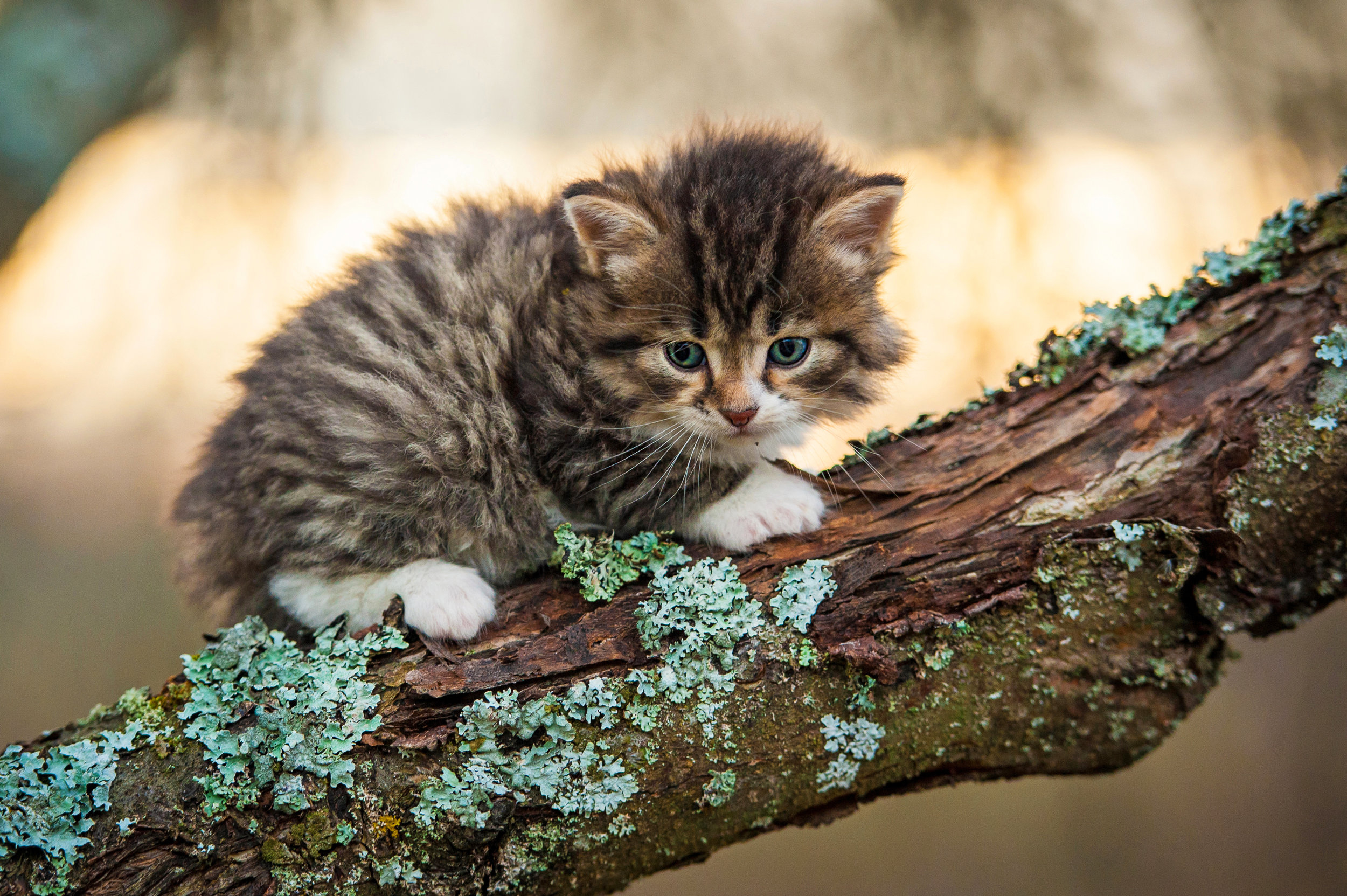 This cat looks like she's stuck in a tree… poor kitty.