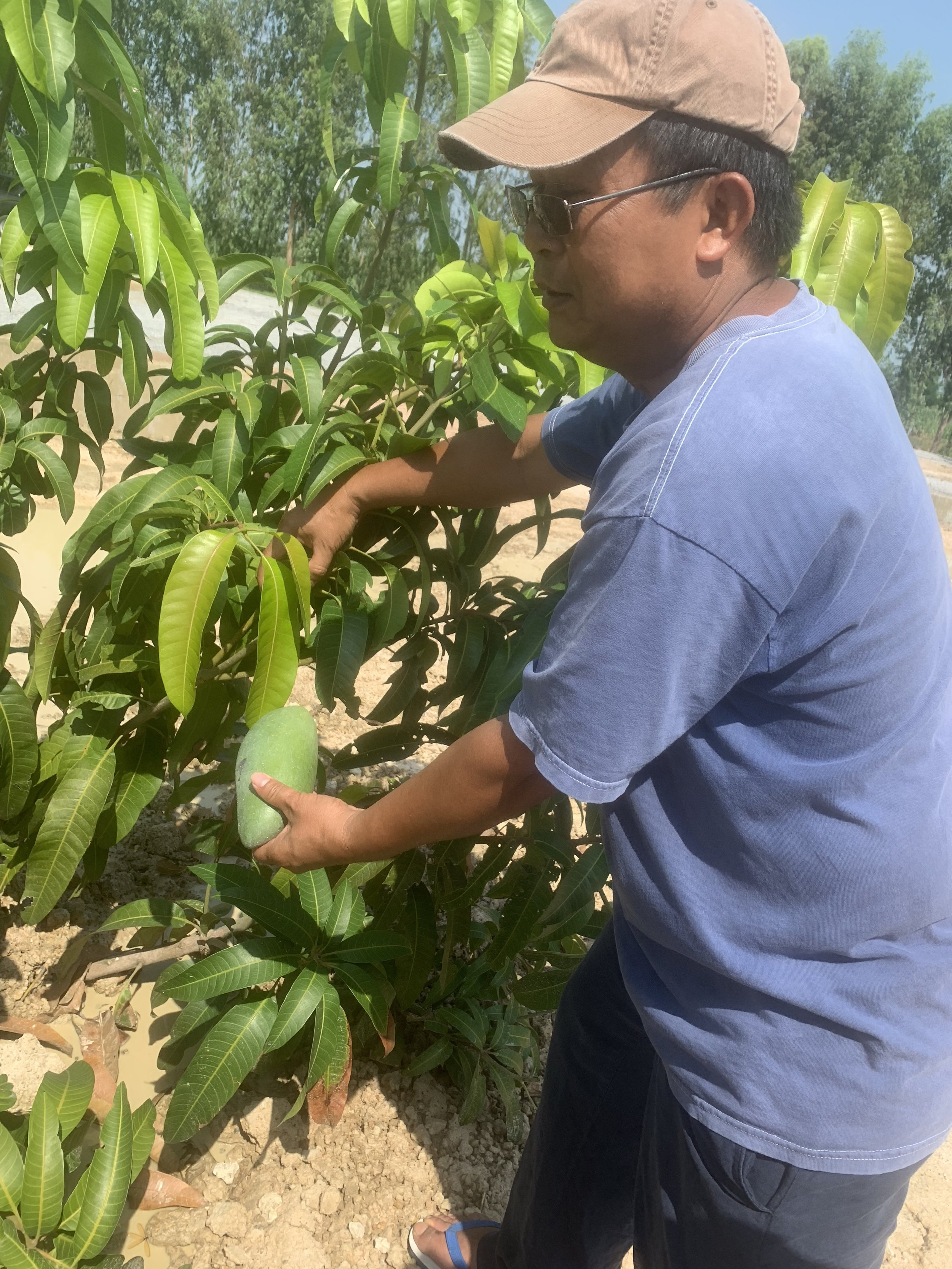 These are the fresh mangos from Khem's mango tree right outside of the church!