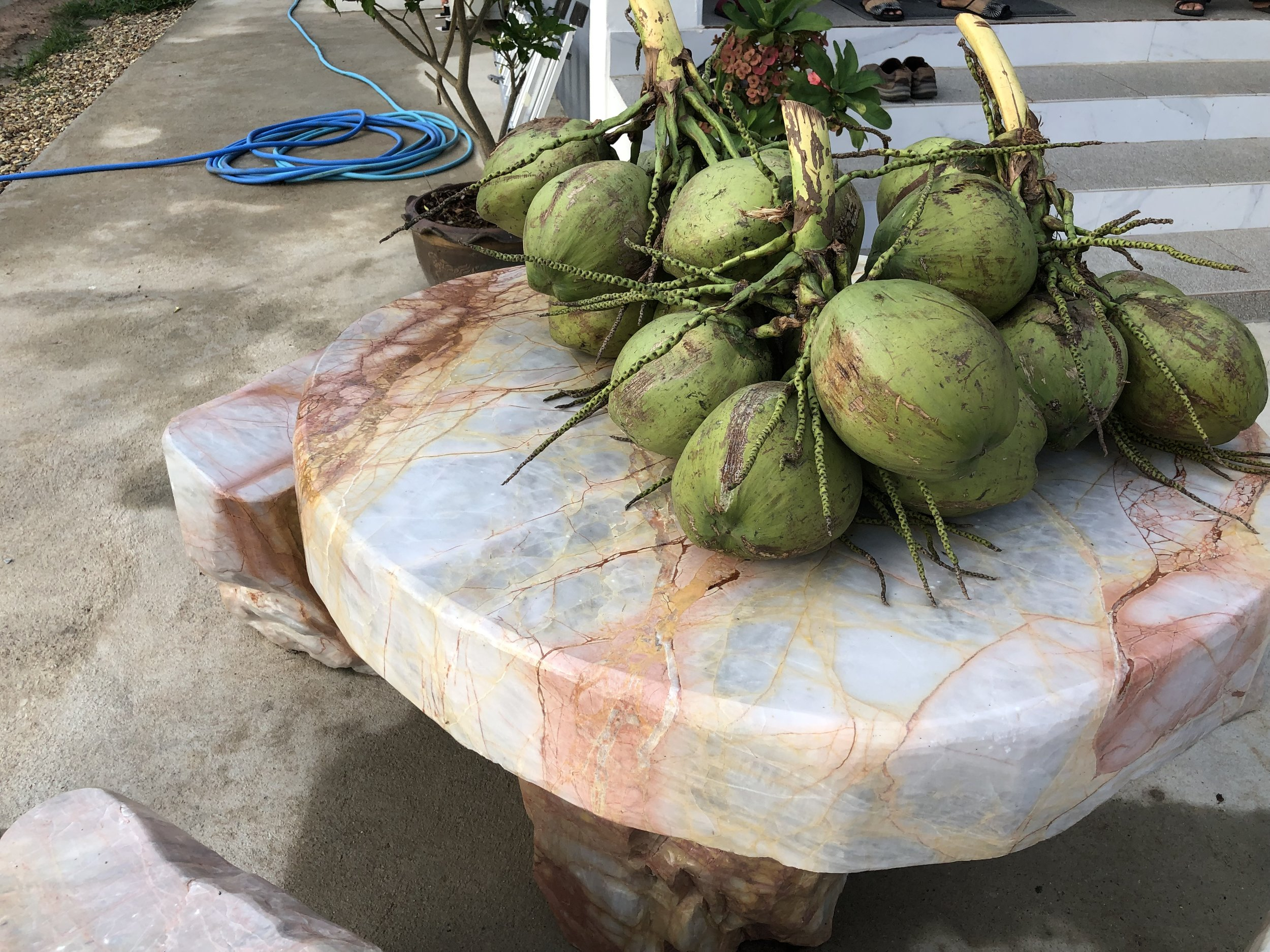 Coconuts we enjoyed this morning, the calm before the storm