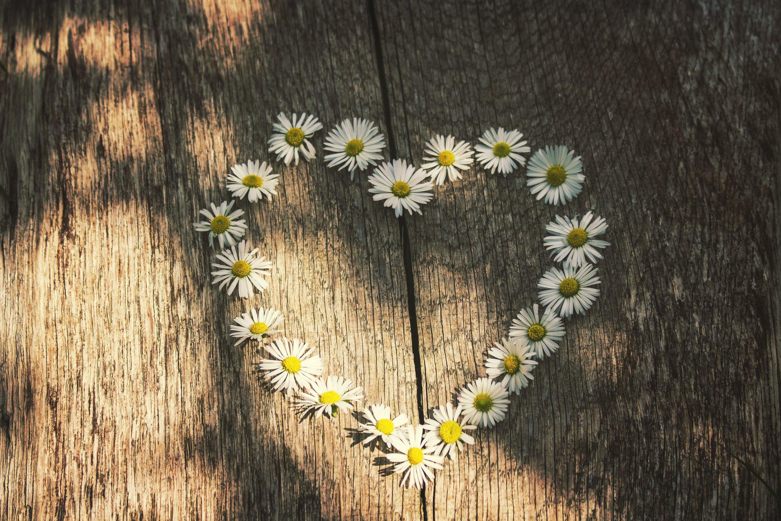 art-artistic-daisies-459375.jpg