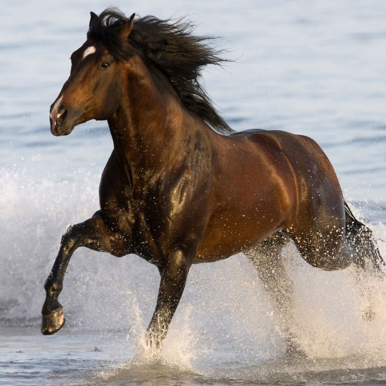 Animals-Black-horse-beach-sea-water-desktop-HD-Wallpaper-1920x1440.jpg
