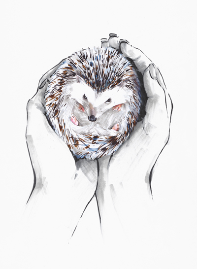 Hedgehog sitting in hands illustration