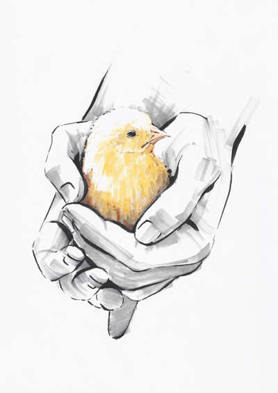 Cute chick in hands illustration sketch