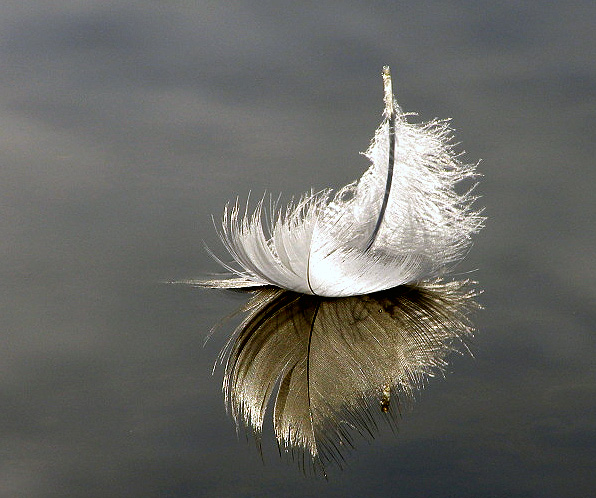 floating feather.jpg