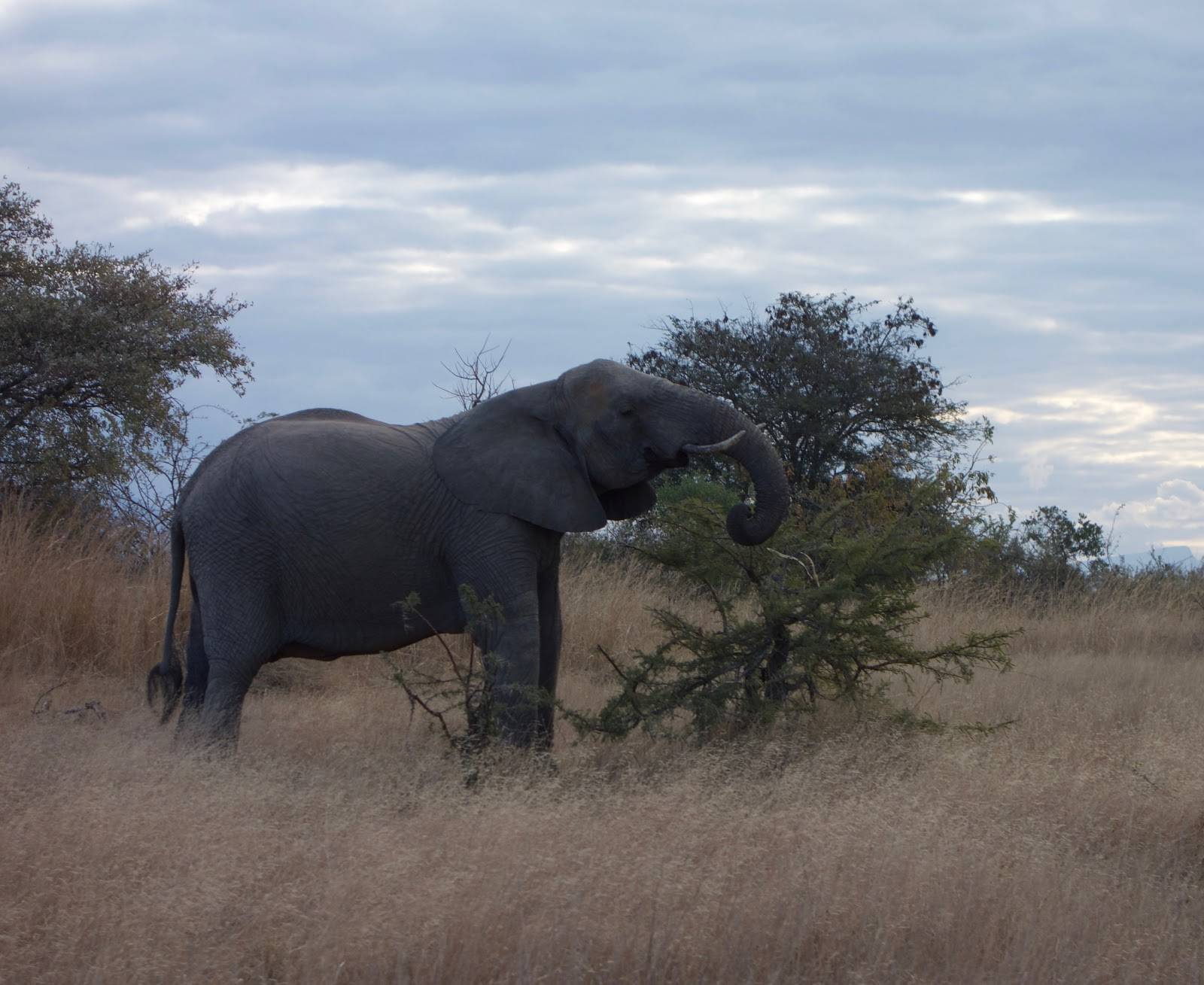An Elephant spotted on a Global Journeys trip.