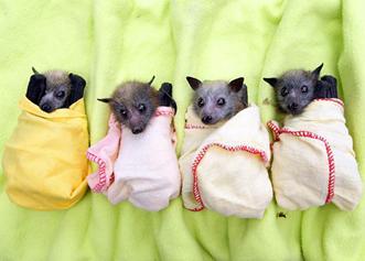 babybats.jpg