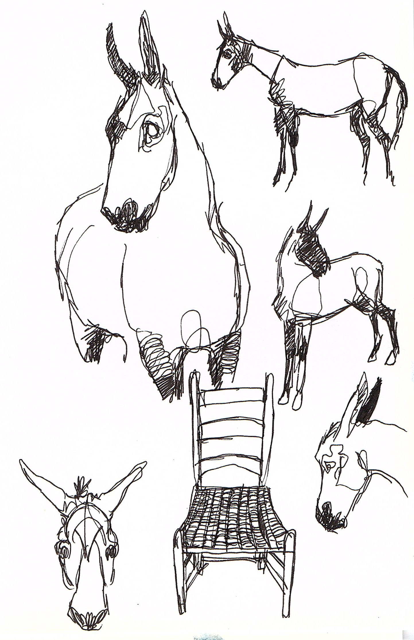 mule sketches