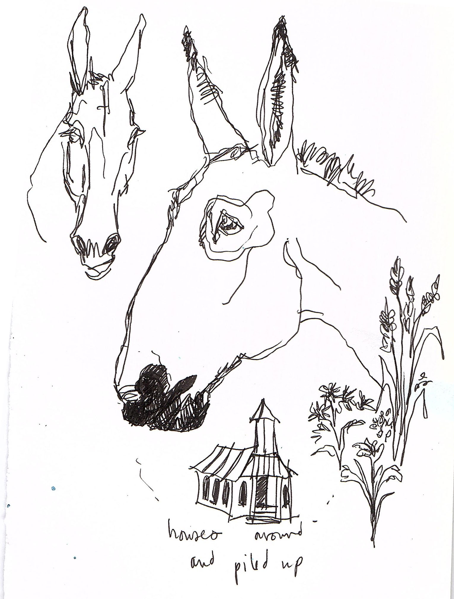 mule sketches 2