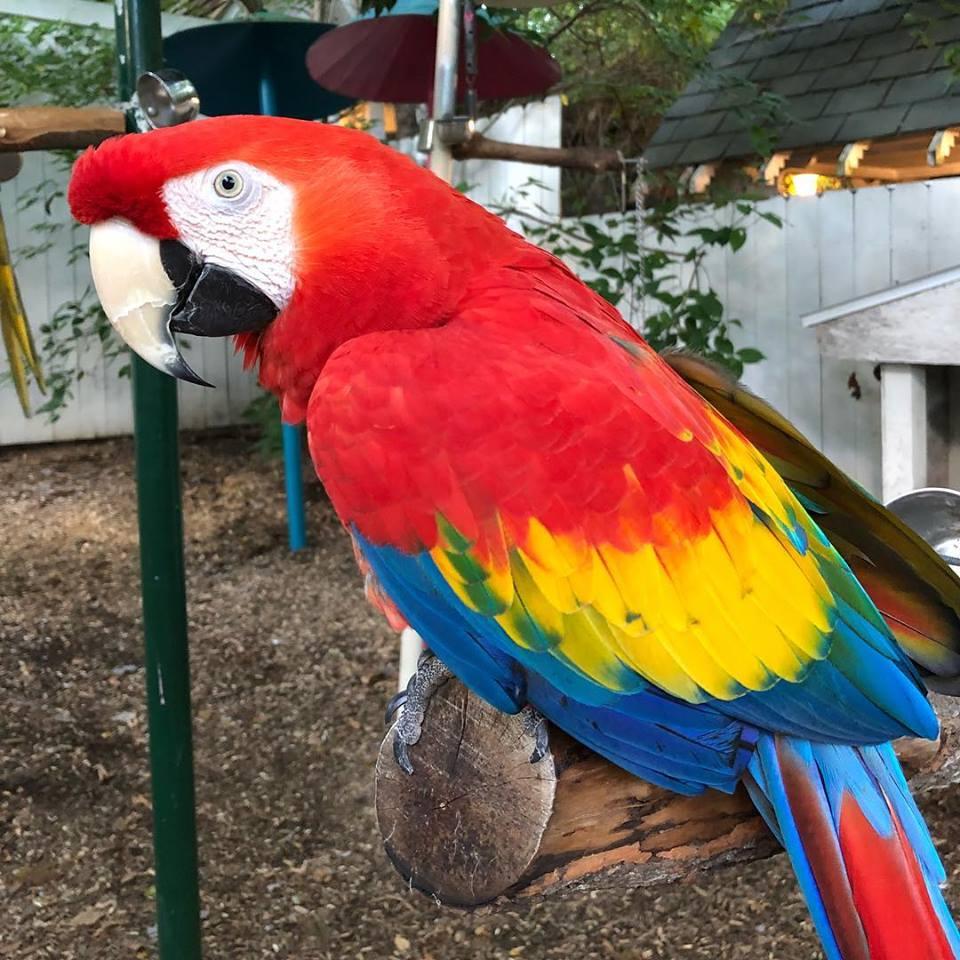 Parrot Mountain 1.jpg