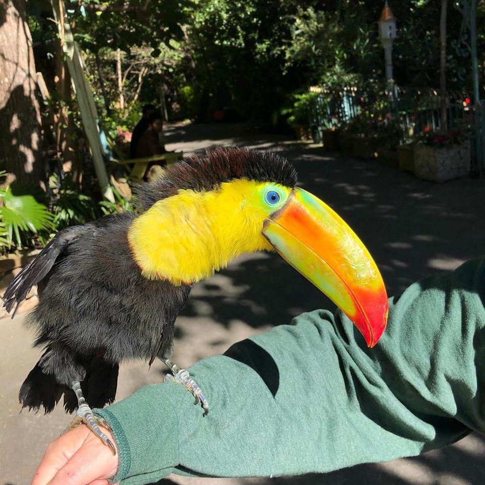 Parrot Mountain 3.jpg