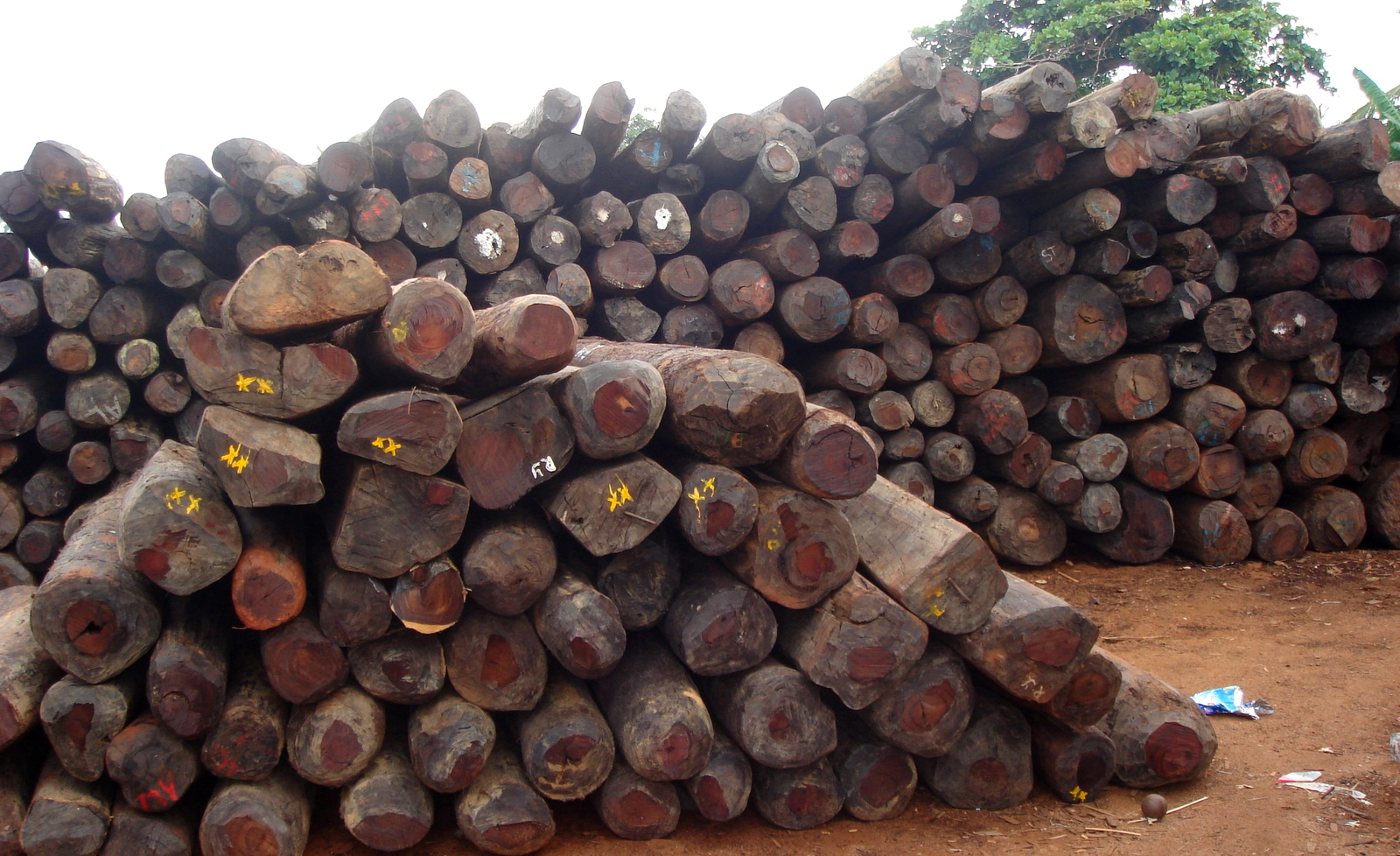 MORE LUCRATIVE THAN COCCAINE - THE ROSEWOOD TRADE