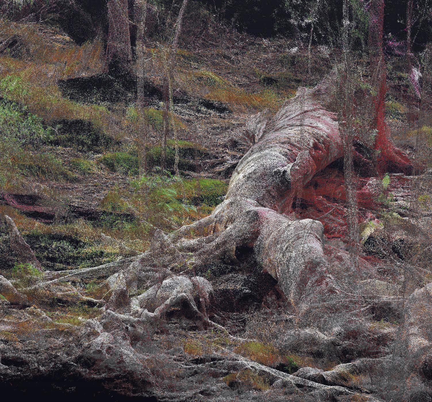 Lidar scan of a dead Eucalyptus tree