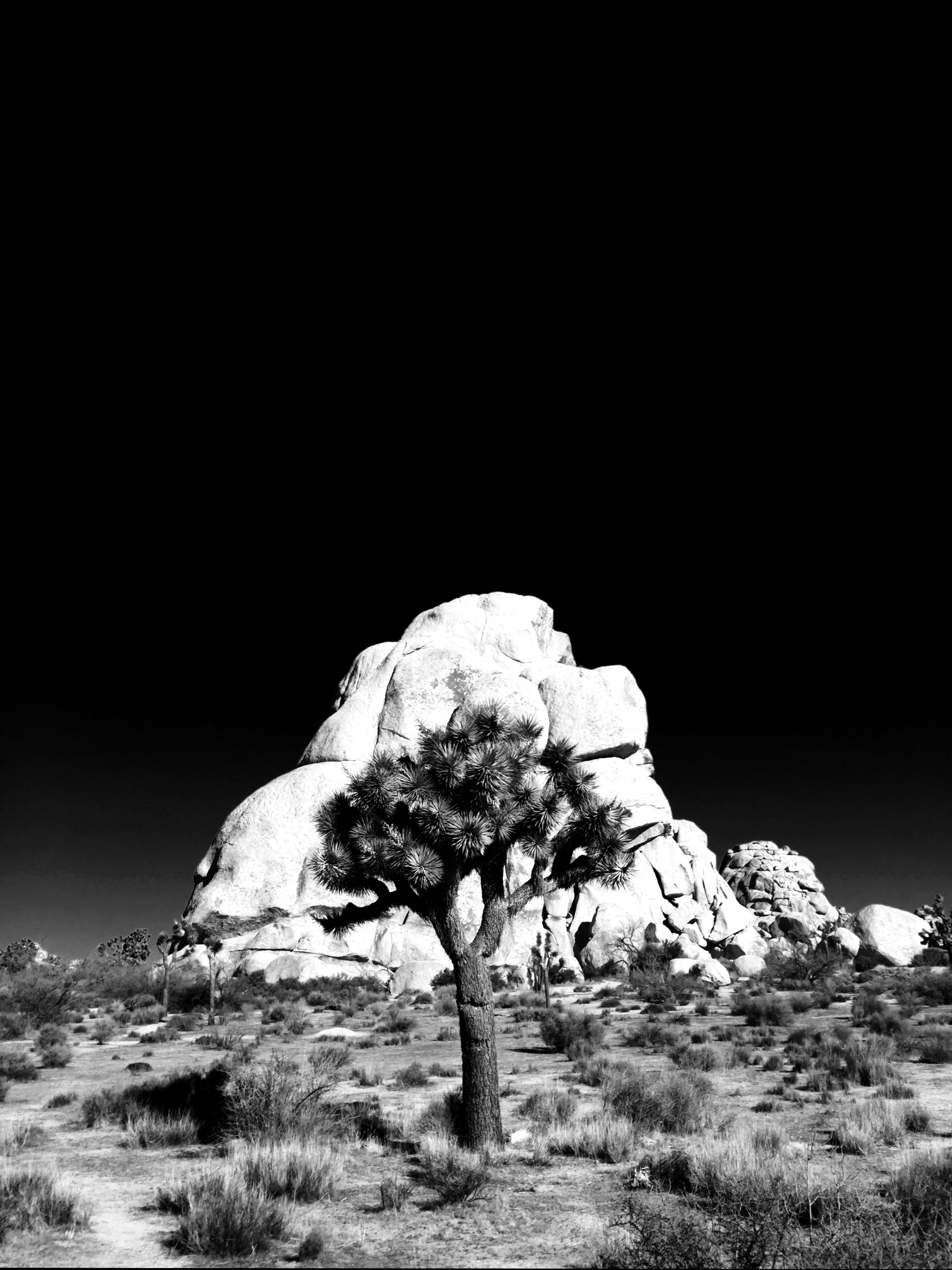 Joshua Tree National Park - by Alistair Eagle