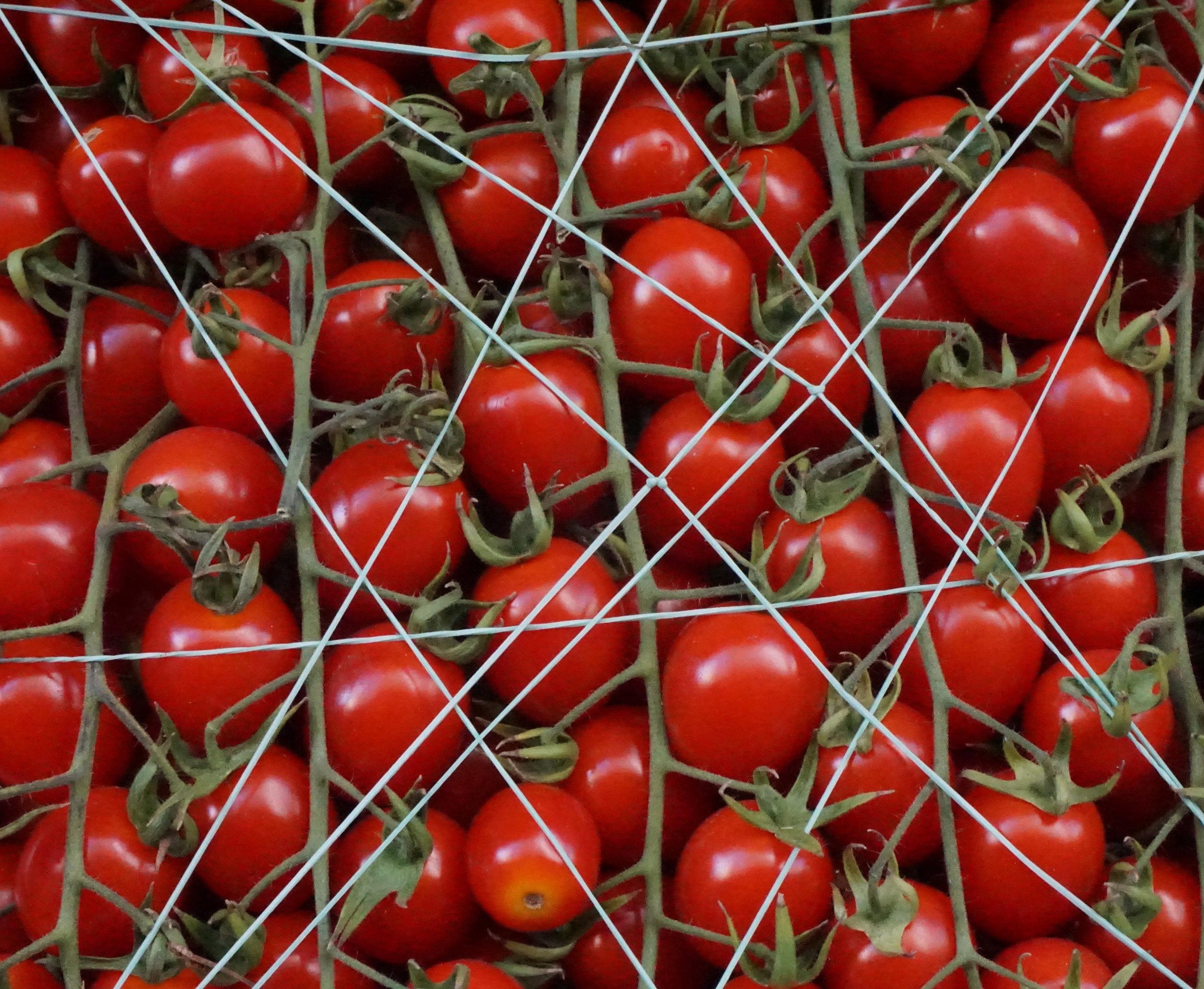 tomato 2019.jpg