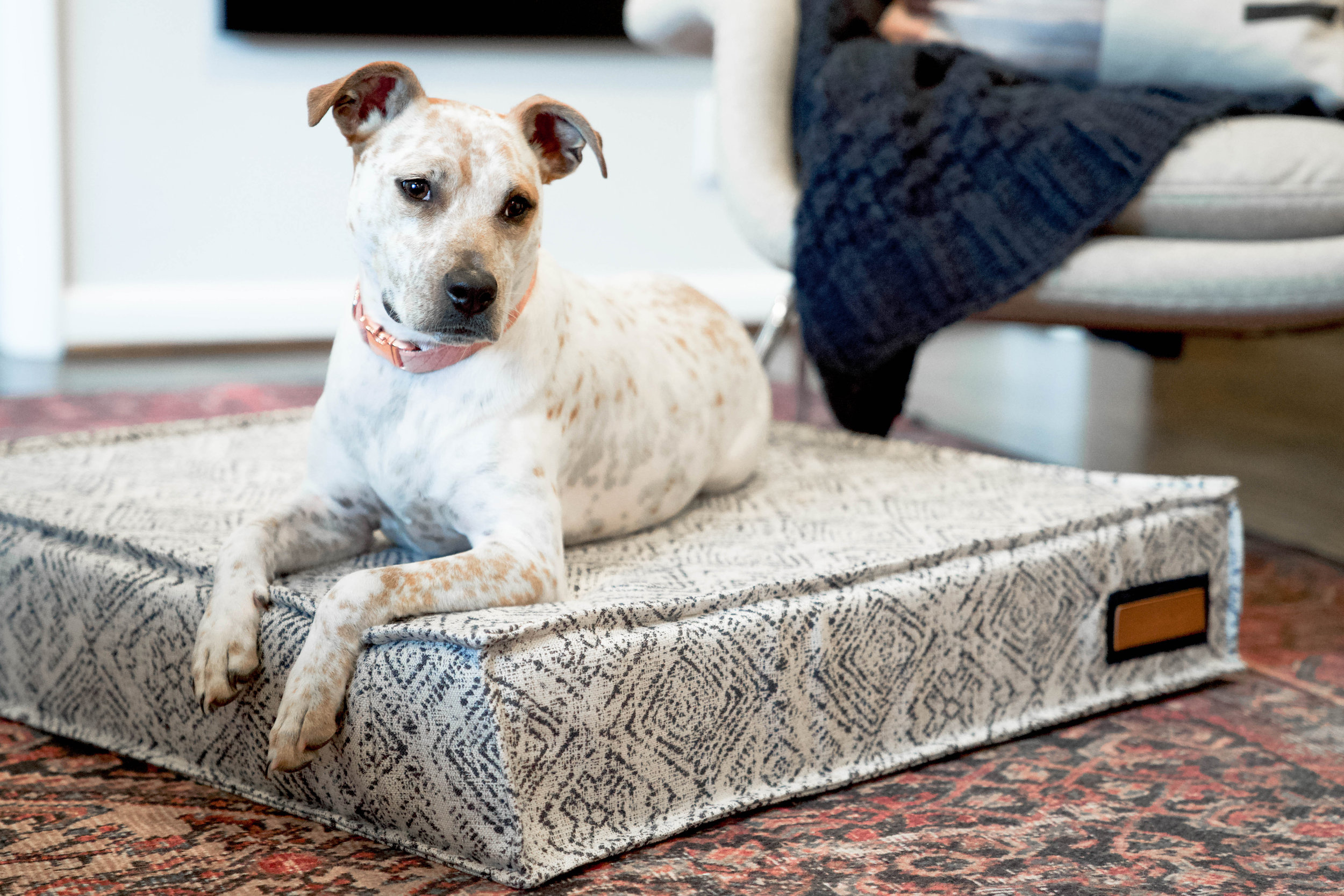 Lounger Beds - Does your pet stretch out like a flying squirrel when they sleep? Whether on their tummy, side or back, if your dog likes to stretch out when they relax the Lounger is the best bed for them. The Lounger Bed comes in small, medium, large, and x-large sizes and with a generous 6 inch foam there is not a more comfortable place for a long nap. The Lounger comes in two insert options: our standard blow fill, built to retain its loft, never clumping or flattening AND a supportive orthopedic foam for pets who need a bit more joint support or those that may have a little more grey around the muzzle.
