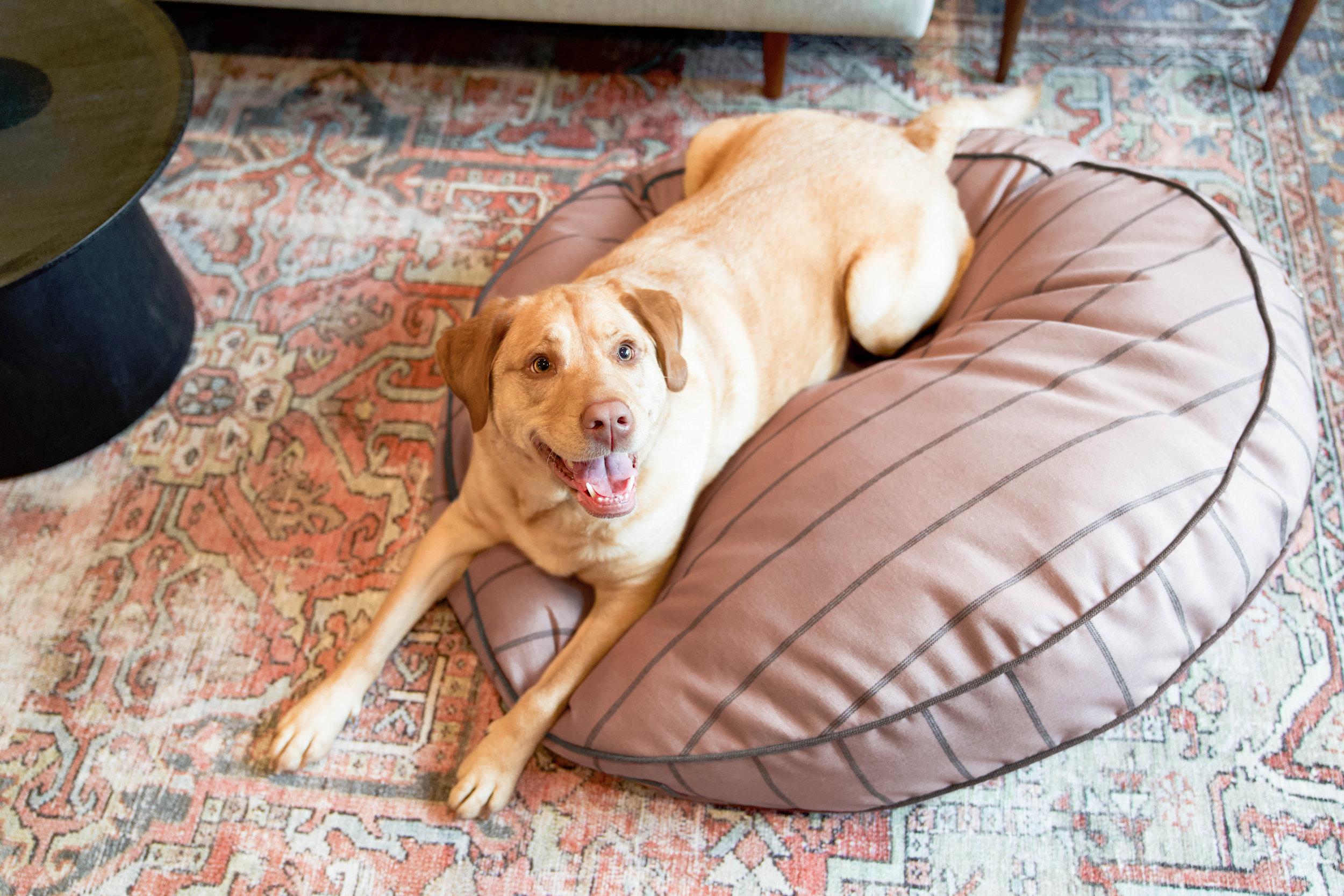 230019-Blushing Basset-The Houndry Pet Beds-2.jpg